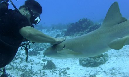 Cozumel Dive Sites Grow in Popularity